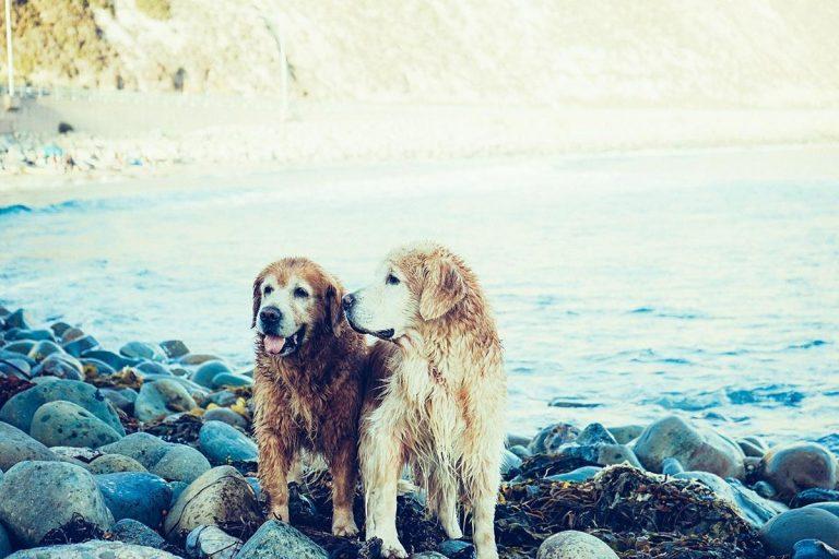 Zatrzymaj bóle głowy, dowiedz się więcej o psach